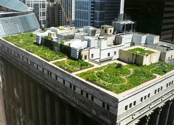 Rooftop Garden on Chicago's City Hall