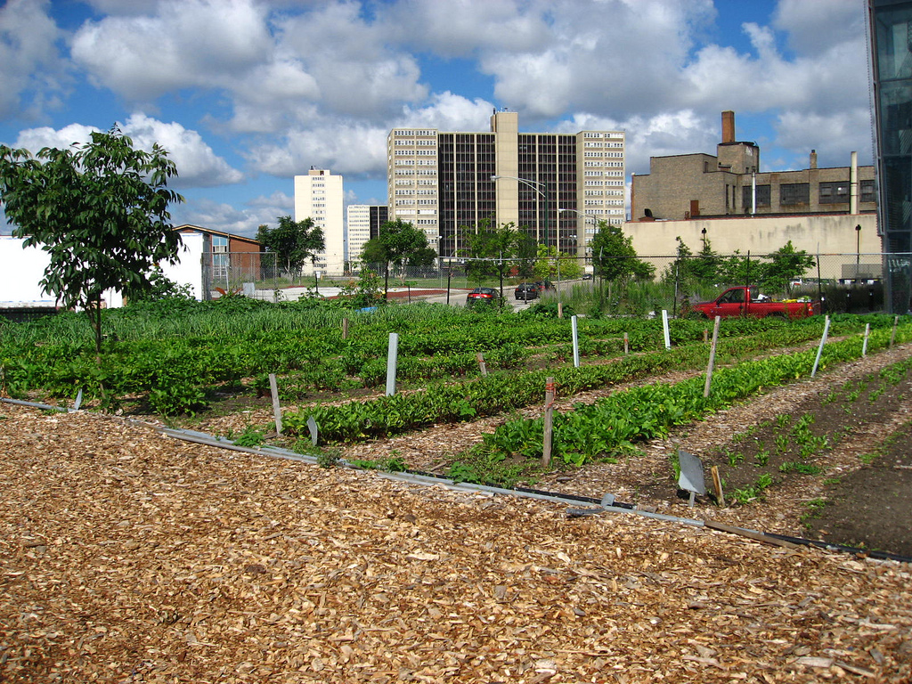 Detroit Gives Go Ahead to Controversial Urban Farm Project News