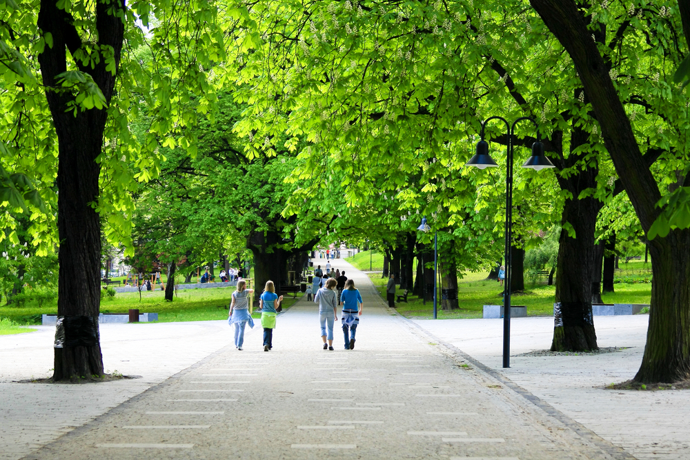 Researchers Finding Evidence of the Negative Impacts of Trees in Urban Settings