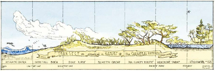 Natural Transect sketch